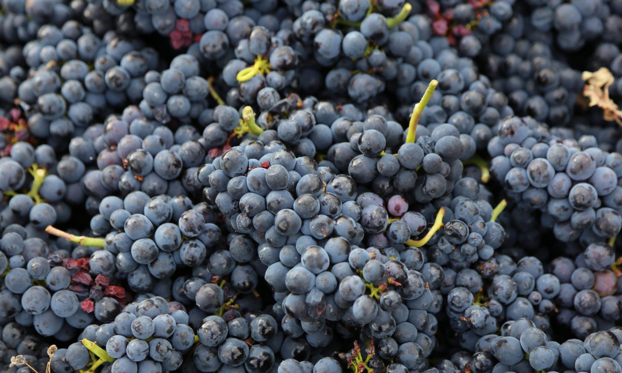 Sanler Wine AB